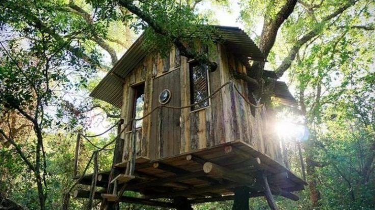 Raw Romantic Tree House